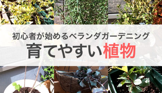 ガーデニング初心者も育てやすい我が家のベランダで育てる植物6選
