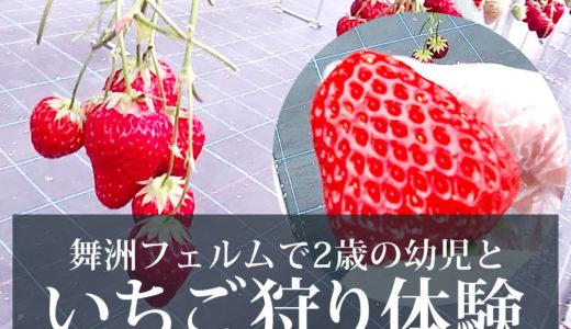 2歳の幼児とおでかけ!大阪の舞洲にある舞洲フェルムで初めてのイチゴ狩り!